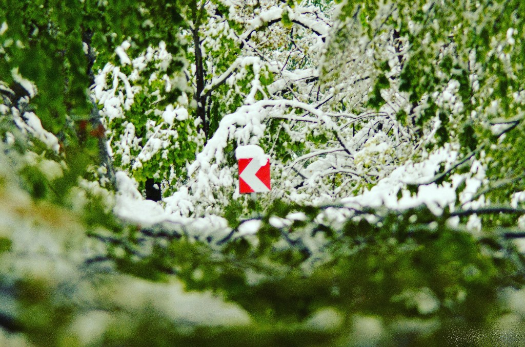 24. kép - Áprilisi tél