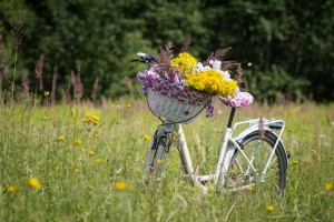 bicycle-2553927_1920